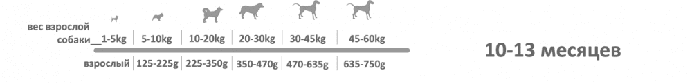 adragna breeder premium junior 10_13