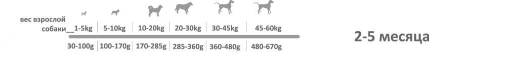 adragna breeder premium junior 2_5