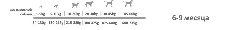 adragna breeder premium junior 6_7